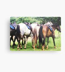 Horse's Metal Print