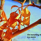 For everything there is a season by Cricket Jones