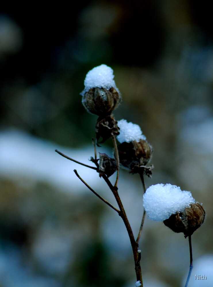 Snow Flower by Nith