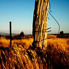Old fence post by Joel McDonald