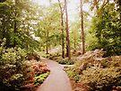 The Azalea Path by Jessica Jenney