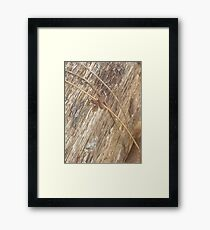 Nature's Ribbon and Bow Framed Print