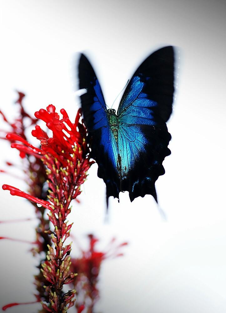 Flutterby by Jenny Dean