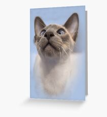 Blue-Point Siamese Greeting Card