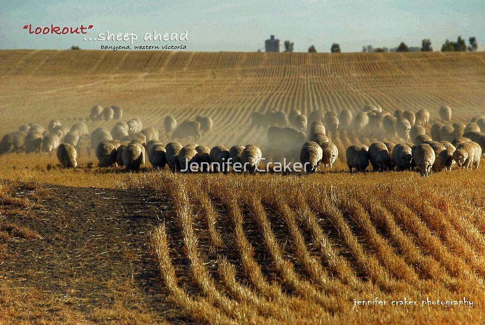 Lookout, sheep ahead by Jennifer Craker