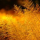 -Bushveld Grass- by Mark Lindsay