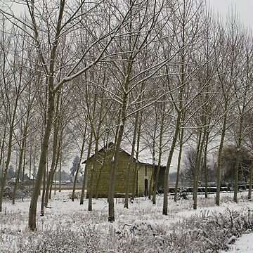 Winter scene by TheOzTraveller