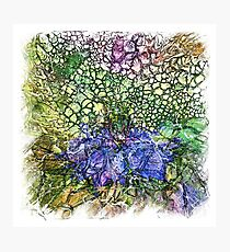 The Atlas Of Dreams - Color Plate 130 Photographic Print