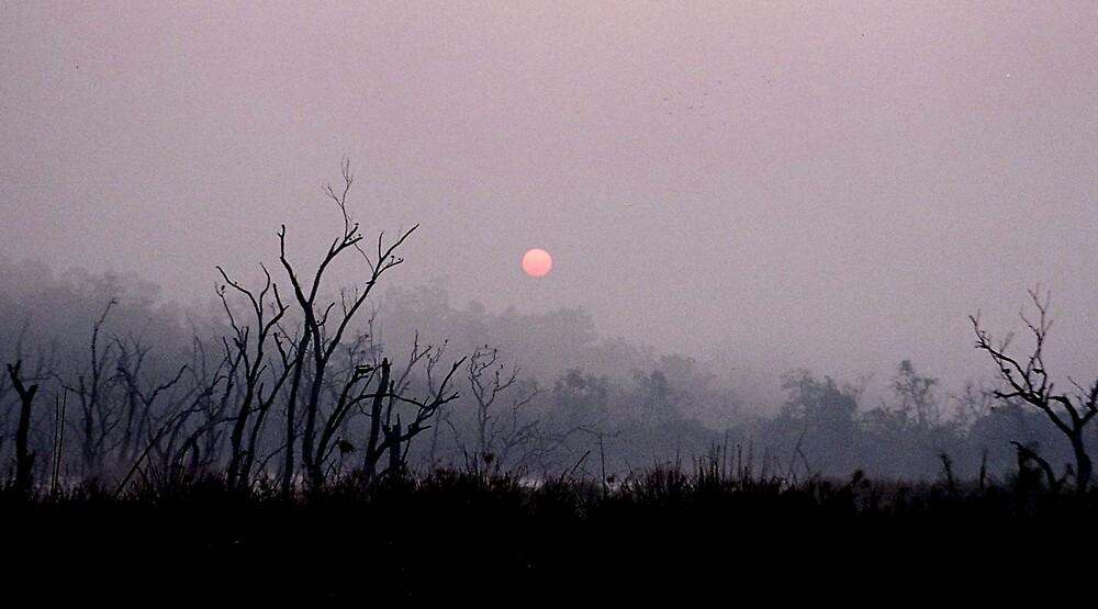 A foggy Morning......... by traveljunky