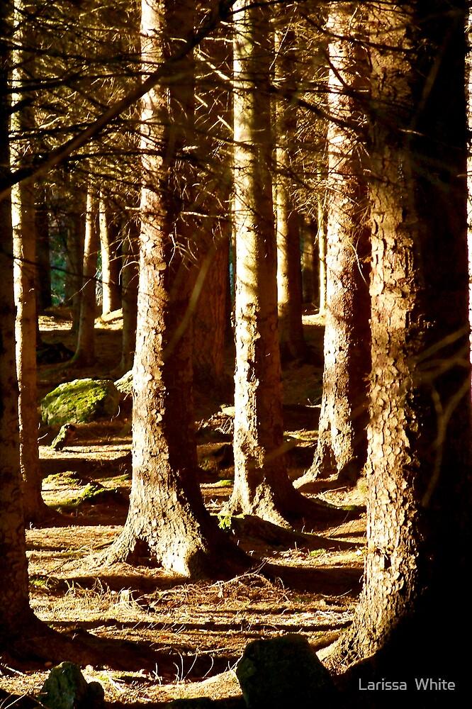Trees by Larissa  Plain