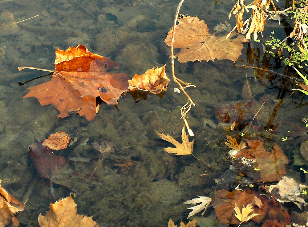 "Fall Colors ""Floating"" by Mandy Keller"