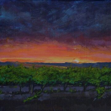 Vineyards at Sunset by Anthropolog