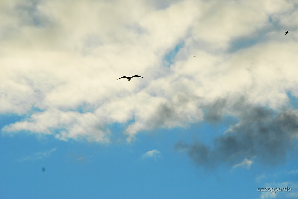 seagull in high clouds by azzoppardo