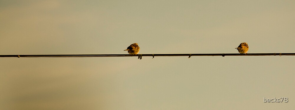 Lonely Sparrows by becks78