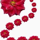 Red Flower 1 by Yvonne Carsley