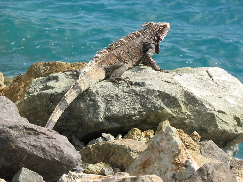 Girls Iguana have fun :) by raybonz