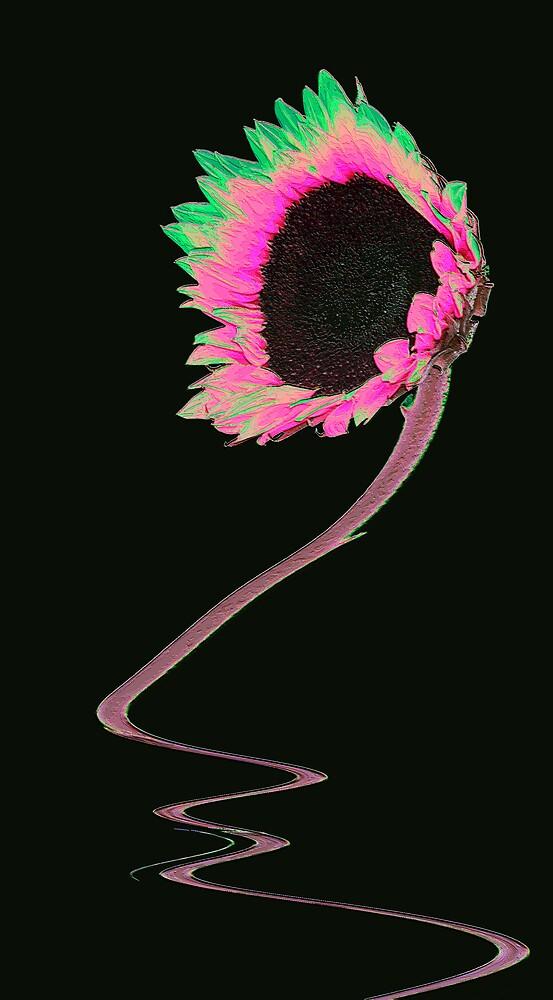 Sunflower (R) by Carol Saunders