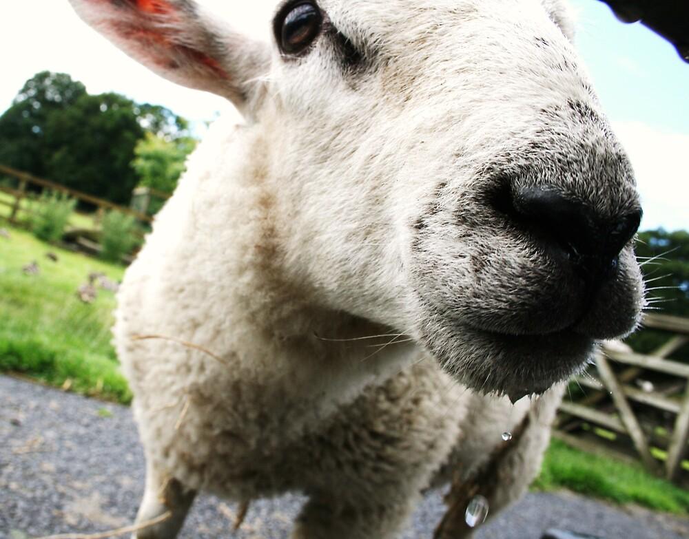 Sheep 1 by Jessie-Kay