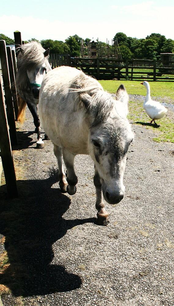 Pony 5 by Jessie-Kay
