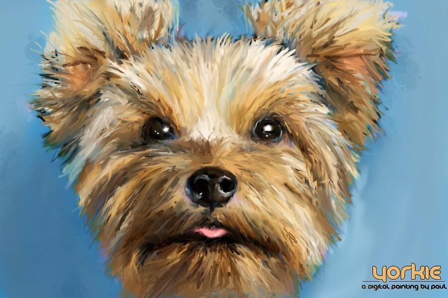 Yorkie Speed Digital Painting by Paul P.