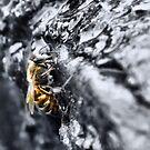 Alien Bee by Sandra Moore