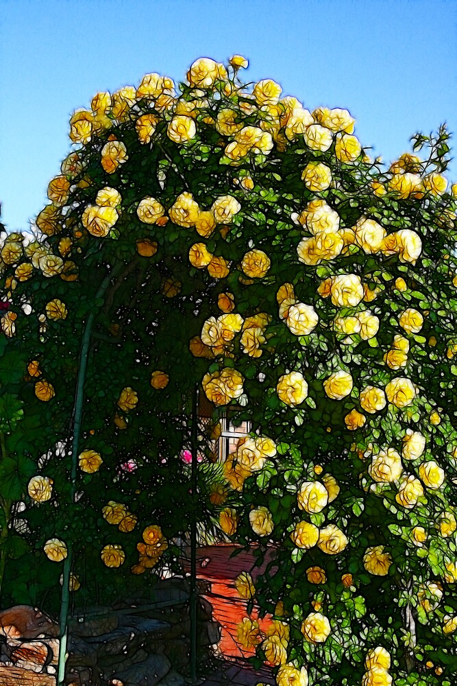 Archway of yellow roses by SarahTrangmar
