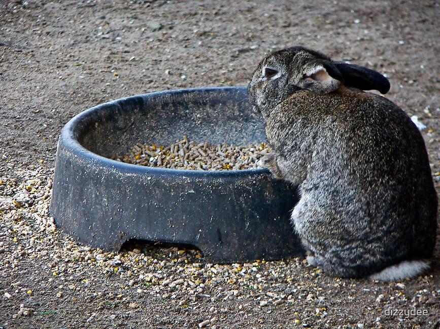 Bunny by dizzydee