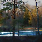 Frozen Pond by Judi Taylor