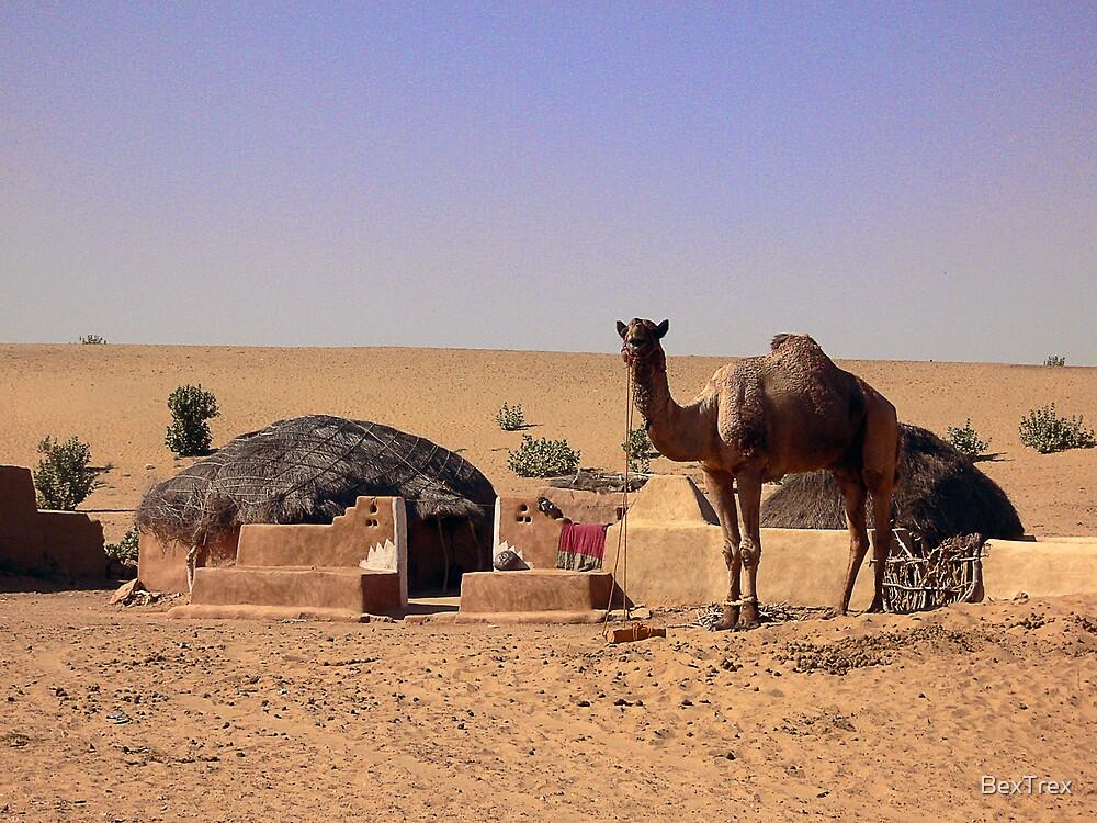 Desert Dwelllings: Jaisalmer by BexTrex