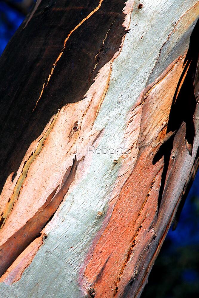 Eucalyptus by J.  Roberts