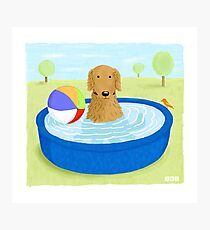 Kiddie Pool Dog Photographic Print