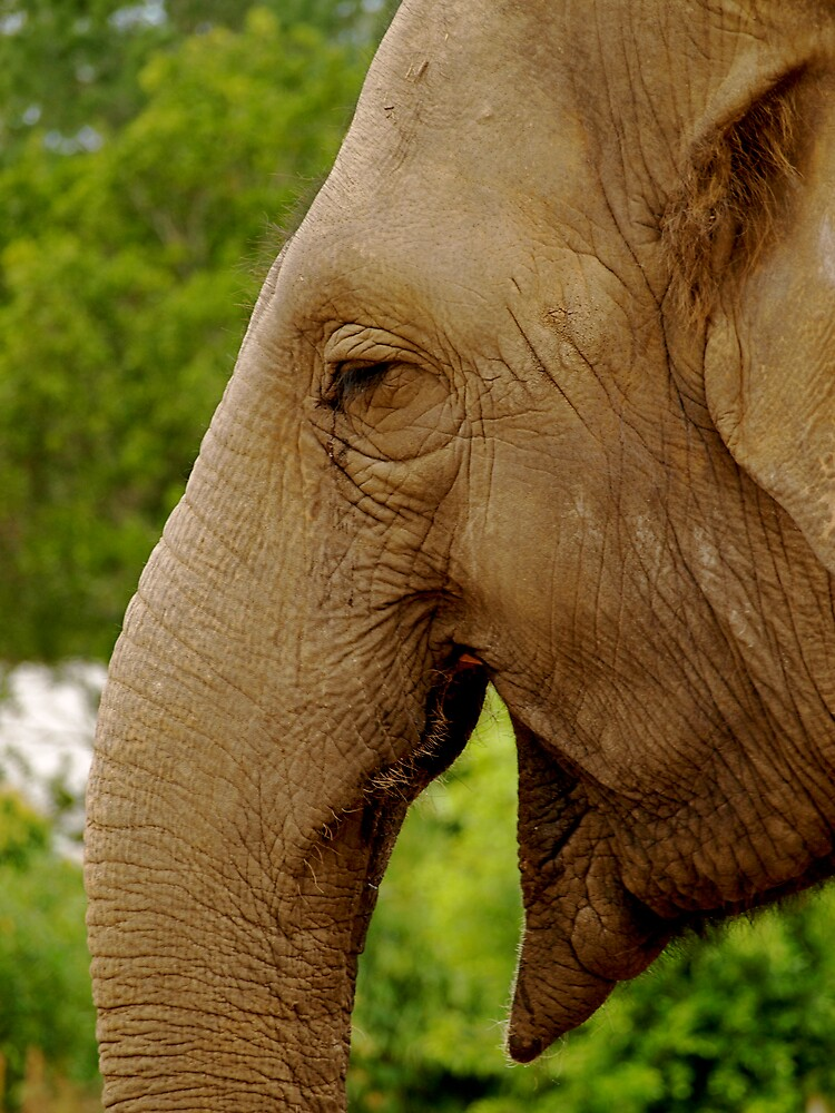 Smiling Elephant by archieswell