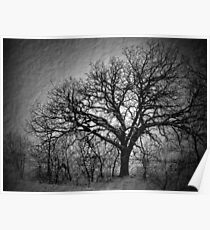 Old Timey Tree Poster