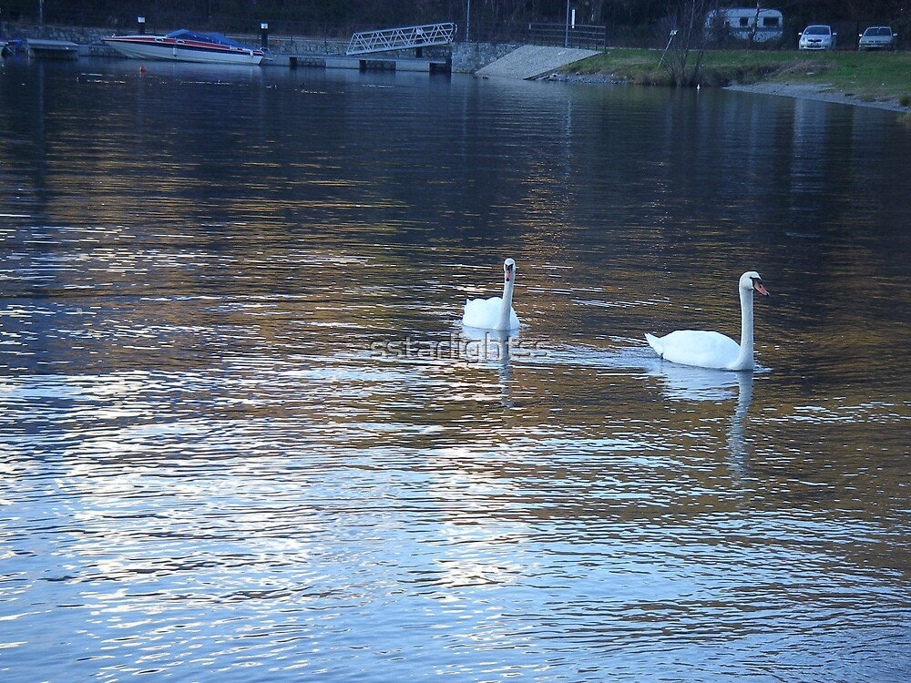 Glorious swans by sstarlightss