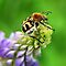 Featured Flying Insects...