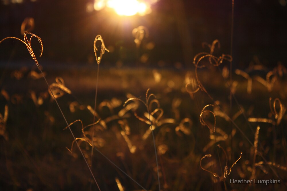 Fairyland by Heather Lumpkins