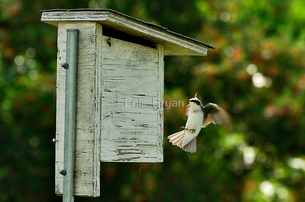 Landing Gear Engaged by Lois  Bryan