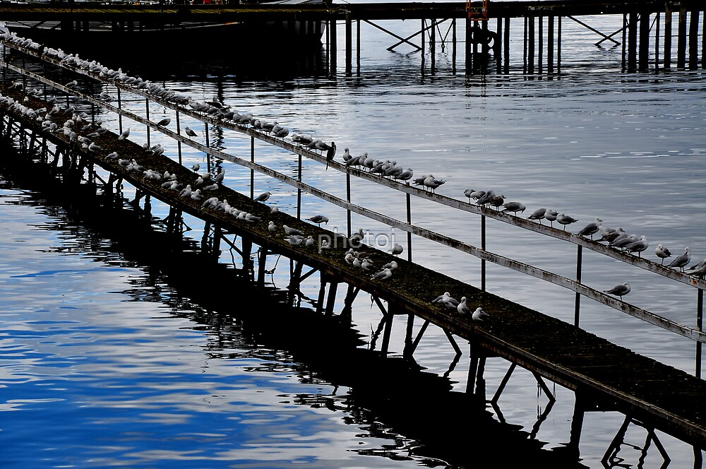 photoj Tas Sth, 'Bird Time' by photoj