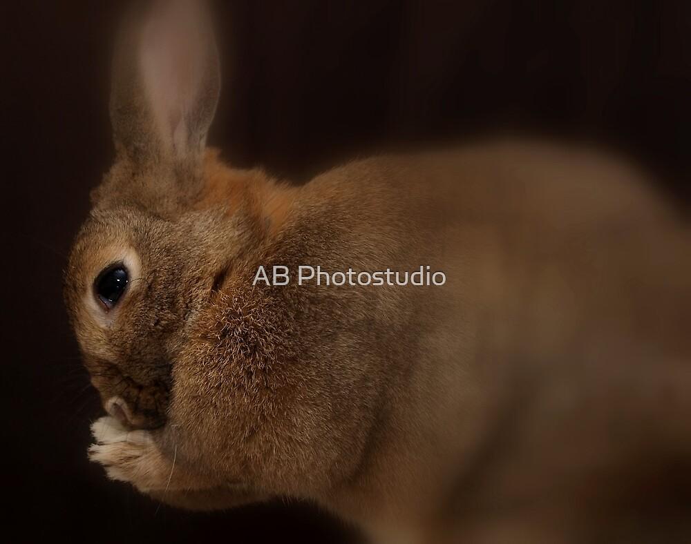 Praying bunny by Arve Bettum