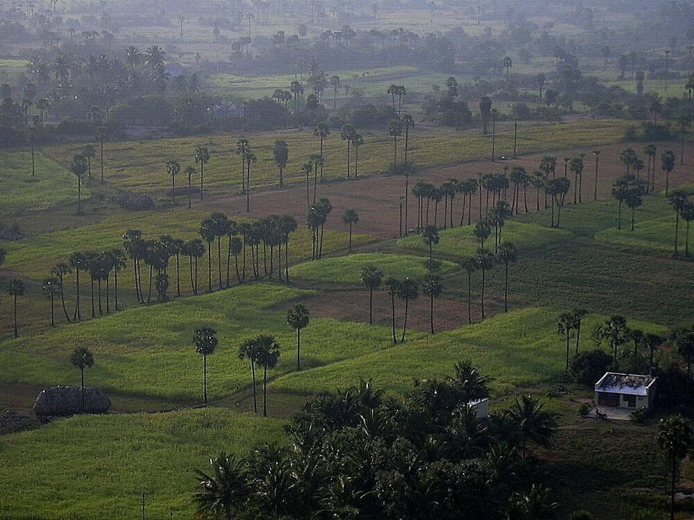 fields by pugazhraj