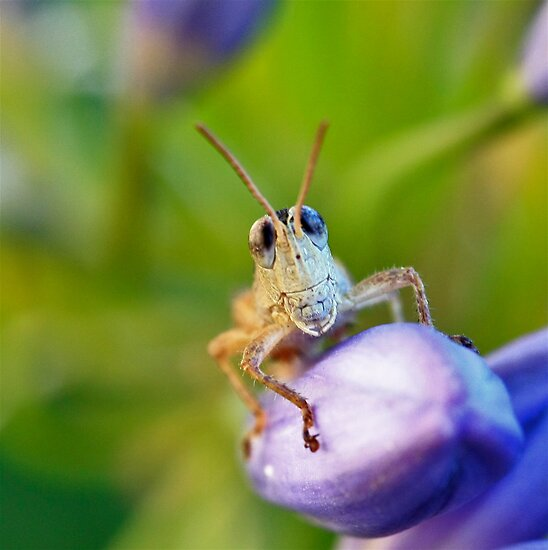 Bug Eyes by Selina Tour