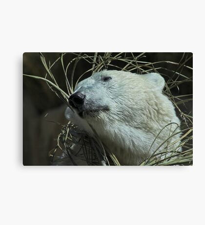 Do You Like My New Grass Hat? Canvas Print
