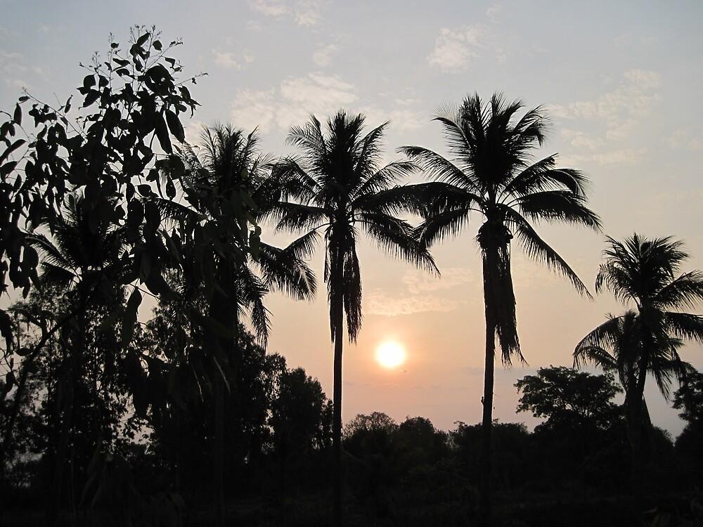 Coconut Sunrise by Hugh Fathers