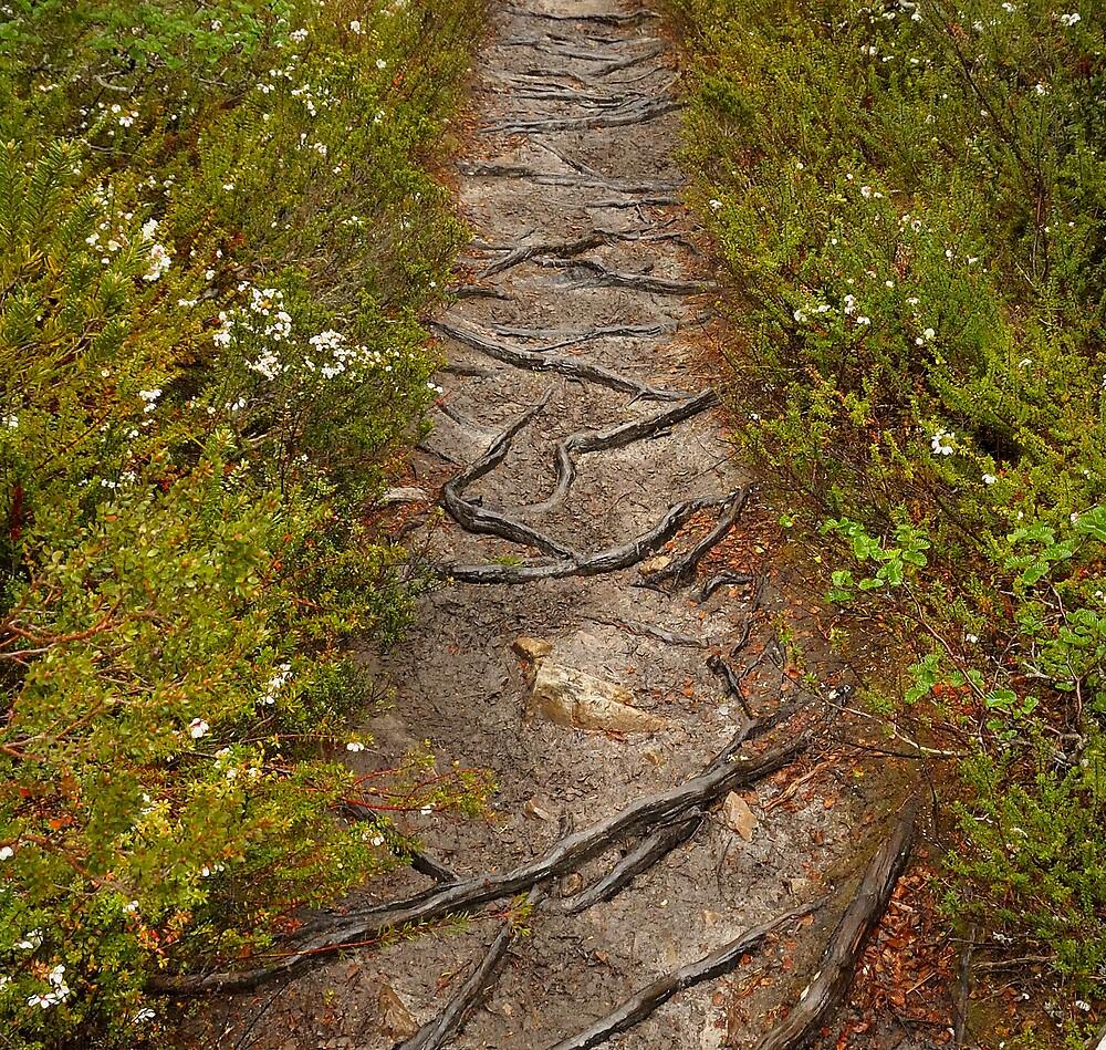 Nothofagus Path by John Shortt-Smith