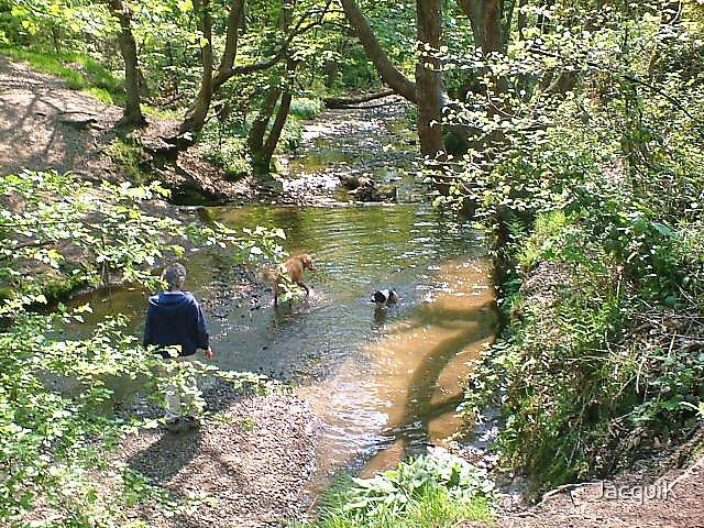 Borsdane Wood 3 by JacquiK