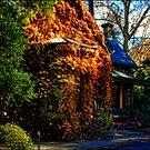 Autumn Shades by Steven Maynard