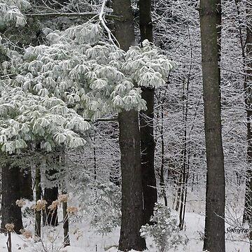 Frosty Forest by rsobiera