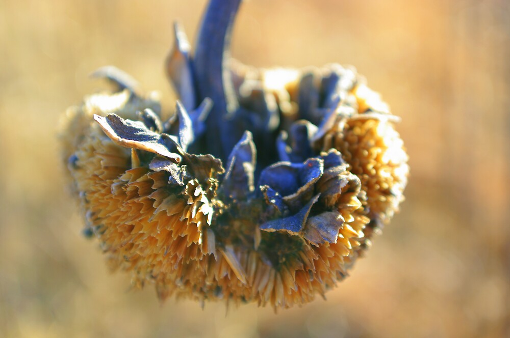 Death of a Sunflower by Melissa  W