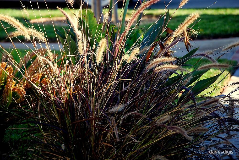 Wild Grass by davesdigis