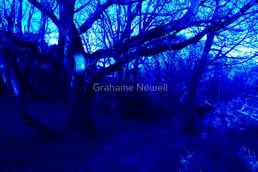 If You Go Down to the Woods Today by Grahame Newell